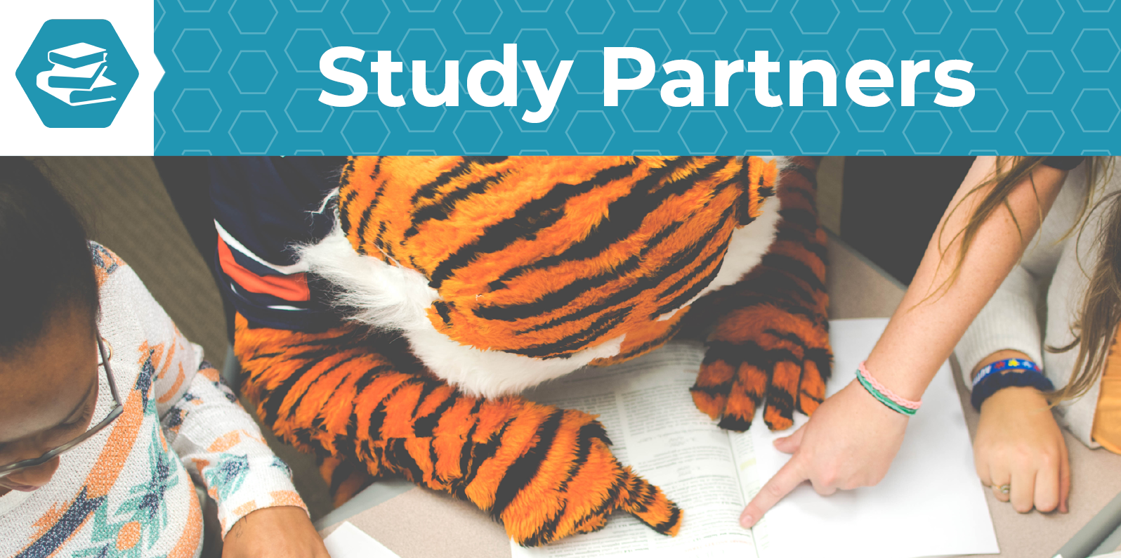 Study Partners - Webpage Header